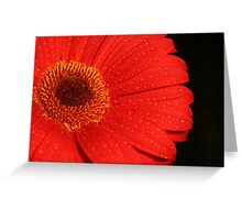 red gerbra Greeting Card