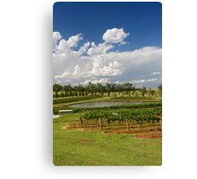 Hunter Valley Vineyard Canvas Print