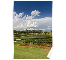 Hunter Valley Vineyard Poster