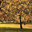 Autumn at the Triangle by John Gaffen