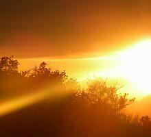 Sunset Dreams by Tanayri
