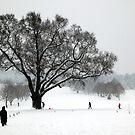 Turkey Oak in the Snow by John Gaffen