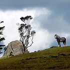 Big Horse or Small Mountain! by Felicity Deverell