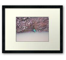 Unidentified Australian Frog Framed Print