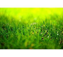 shining grass Photographic Print