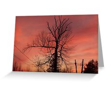 evening silouette front yard tree Greeting Card