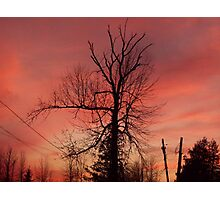 evening silouette front yard tree Photographic Print