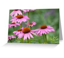 Beautiful Daisies on a Summer Day Greeting Card