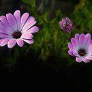 A Garden To Remember II by Al Bourassa