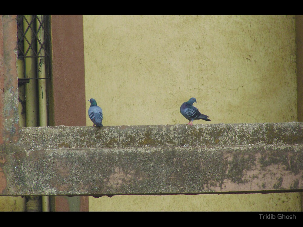Akele Hum Akele Tum ( we are together but alone) by Tridib Ghosh