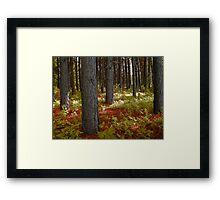 Morning Light in the Woodland Framed Print
