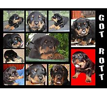 Got Rott? Photographic Print