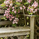 Bench and Flowers by Debbie  Roberts