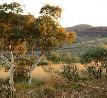 Ghost Gum - Northern Territory by Rosdenphoto