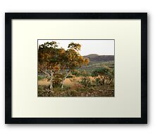 Ghost Gum - Northern Territory Framed Print