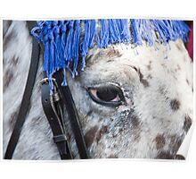Gli Occhi Del Cavallo Italiano Poster