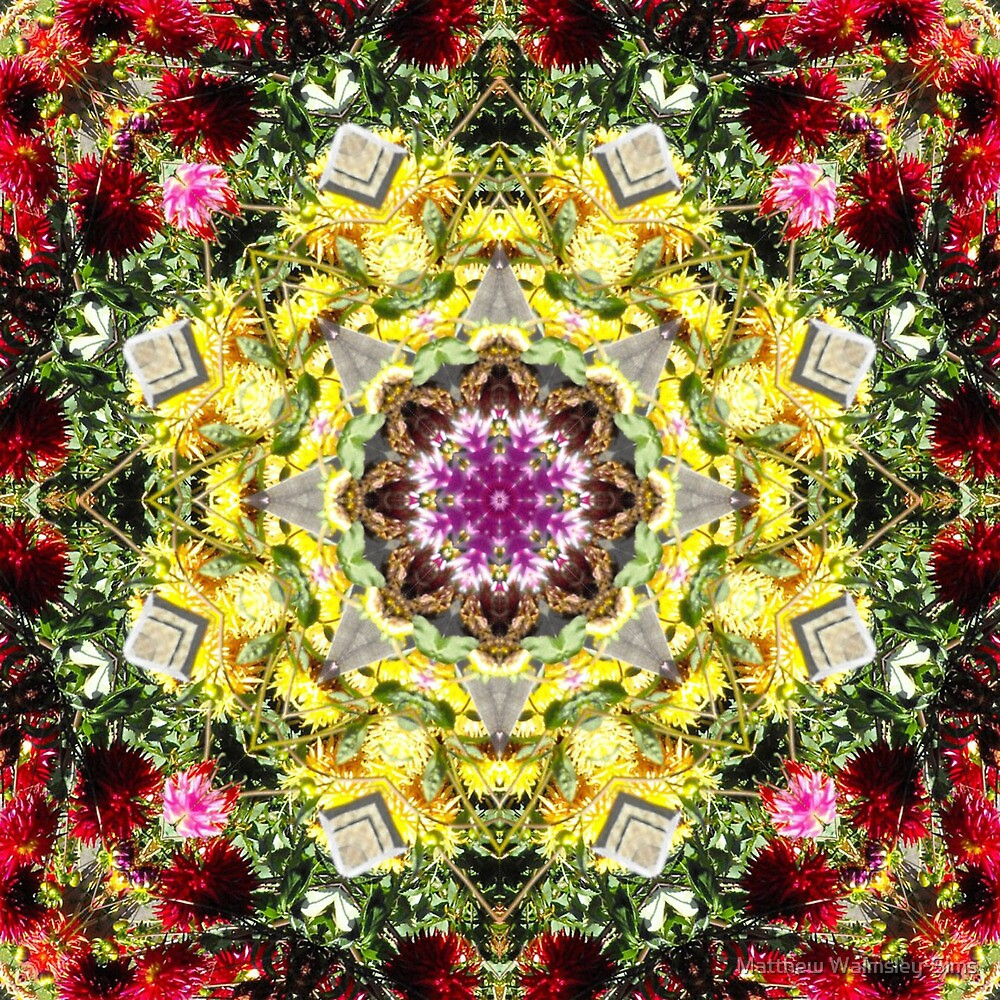 Dahlia's in Bloom Fractured by Matthew Walmsley-Sims