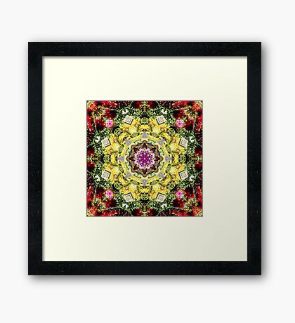 Dahlia's in Bloom Fractured Framed Print