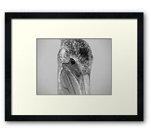 Pelican Eye Framed Print