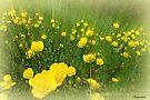 Golden Meadows by naturelover