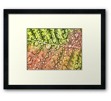 Softer Side Of Autumn Framed Print