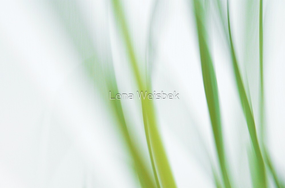 Grasses by Lena Weiss