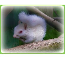 Albino Squirrel Photographic Print