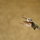 Hummingbird In Flight by Pamela  Ball