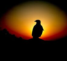 A FALCON BY THE SUNSET by Khaled EL Tangeer