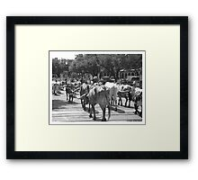 Fort Worth Stock Yards 7 -- The Drive #3 Framed Print
