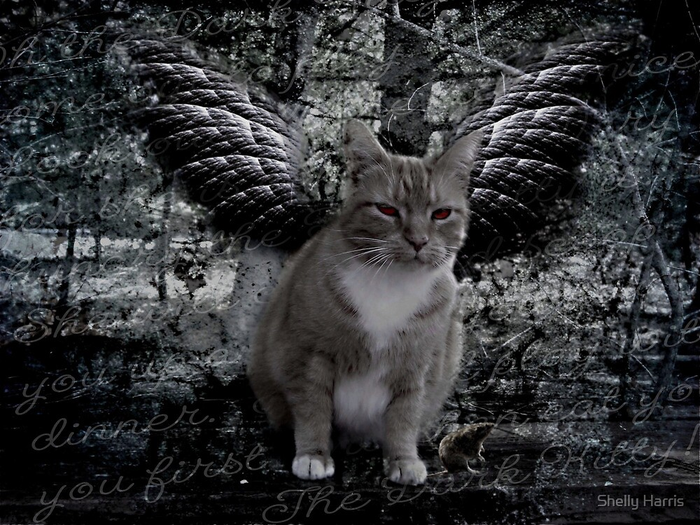 Dark Kitty by Shelly Harris