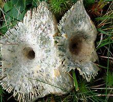 Mushroom Eyes by L J Fraser