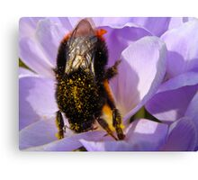 Bumble Bee on Crocus Macro close-up Canvas Print