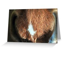 horse muzzle Greeting Card
