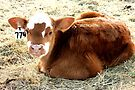 Spring Country Baby ~ Calf by Jan  Tribe