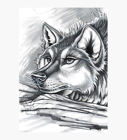 Wolf Grey Photographic Print