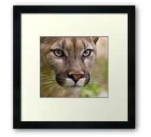 The Cat with many names....... Framed Print