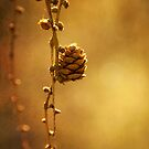 Golden by Rachael Talibart