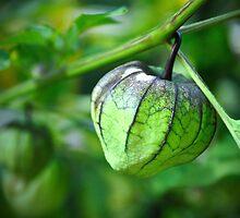 Green world by Susana Weber
