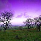 Fairytale sky on Walkhampton Common, Dartmoor National Park by DualAspect