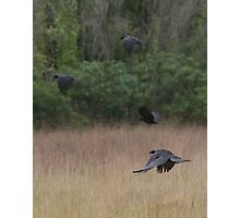 The Crows Photographic Print