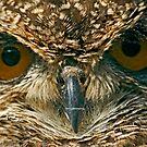 Eurasian Eagle-Owl (Bubo bubo) by Konstantinos Arvanitopoulos