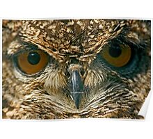 Eurasian Eagle-Owl (Bubo bubo) Poster