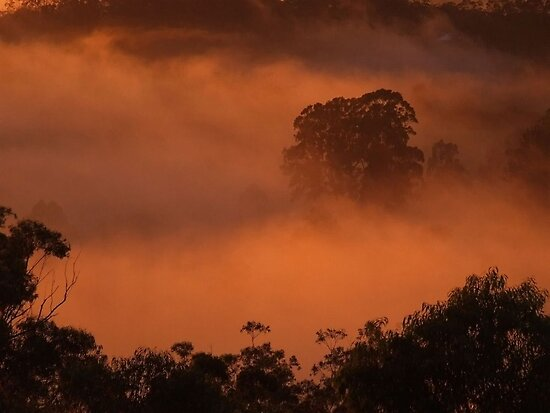 'Captured Sunlight' by debsphotos