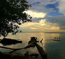 Lake Ontario twilight with ducks by Eros Fiacconi (Sooboy)