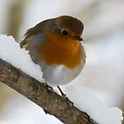 Robin trying to keep warm  by keighley