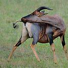 Grab your tail by Paulo van Breugel
