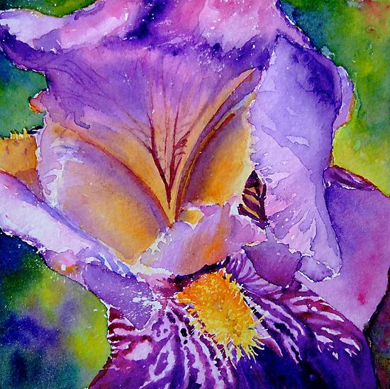 Bearded Iris by Ruth S Harris