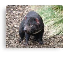 Please don't fade away - Tasmanian Devil Canvas Print
