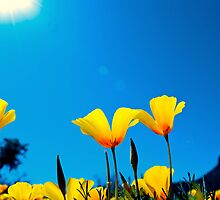 Reaching for the Sun by Angela Pritchard
